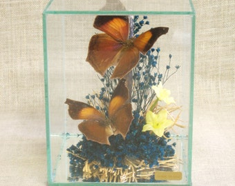Vintage Butterfly Display, Specimen, Flying Insects, Shadow Box, Diorama, Glass, Nature, Encased Butterflies, Sculpture, Taxidermy