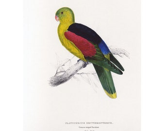 Edward Lear Parrot Book Print on Heavy paper SALE~~Buy 3, get 1 free