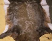 LARGE Vintage Tanned African Blesbok Hide