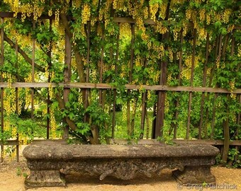 Fine Art Color Travel Photography of Stone Bench and Golden Rain Trees in Wurzburg, Germany