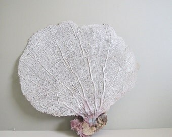 Vintage sea fan/ beach decor/ coastal