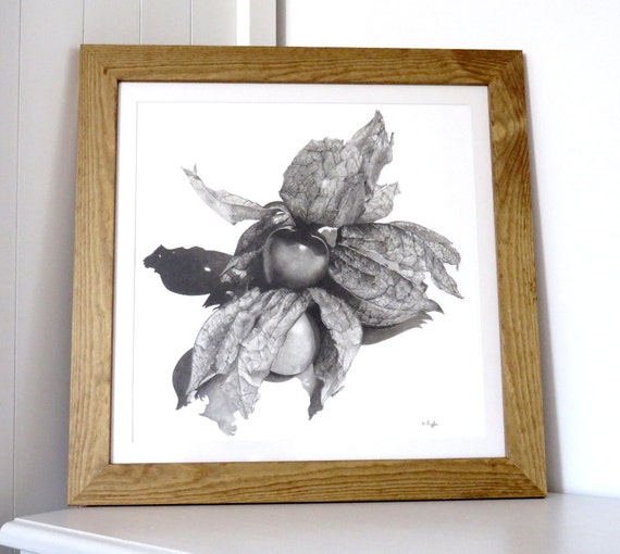 Physalis original charcoal drawing, fruit drawing, pencil drawing, black and white art, still life art, food art, kitchen art, fruit art