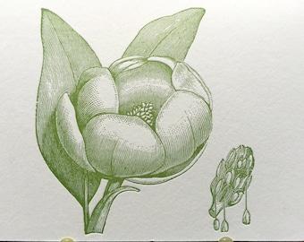 Vintage Magnolia in green