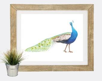 Peacock Watercolor Art Digital Art Print, INSTANT DOWNLOAD, Beach Art Printable, Home Decor, Coastal Decor, Bird Art, Gallery Wall