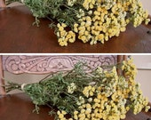 SALE 2  DRIED Tansy FLOWER Bunches Gold Deep Yellow Country Farm Decorating Prim Crafting Floral Rustic Decor Wedding Flowers Shabby Shower