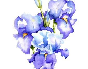 Iris Blooms - FREE U.S. SHIPPING - Original Watercolor