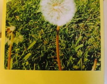 Instagram Photo Card -- Dandelion -- Pastel Yellow Card -- Greeting Card -- Blank Inside
