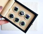 Antique Silver Enamelled Buttons, Edwardian Six Flower Buttons
