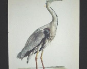 Bird Print, Common Heron, Ardea Cinerea, 1962 Book Plate, Demartini
