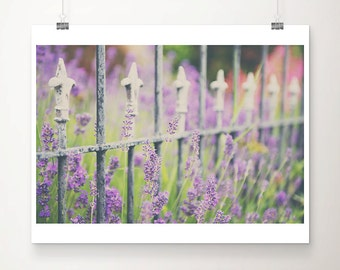 lavender photograph purple flower photograph lavender print english decor lavender art purple flower print summer photograph