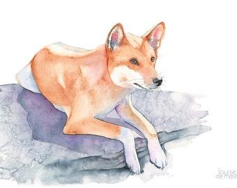 Dingo print of watercolor painting, dingo watercolour painting, australian animal art, D14016, A4 print, Dingo painting