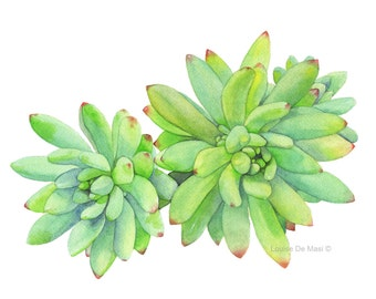 Succulent print of watercolour painting S416 - A4 size medium print Succulent watercolour painting print, botanical art