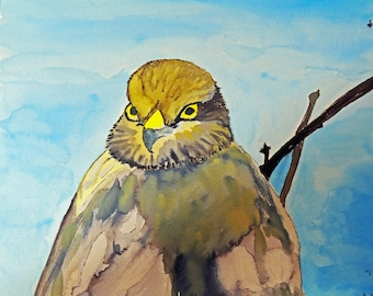 Watercolor 24 * 30 cm Hawk made from one of my picture
