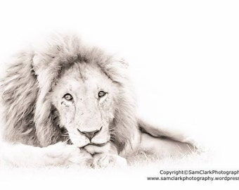 WILDLIFE PHOTOGRAPHY -  LION Animal Photography, Safari Animals, African Photography, Nature photography, Wall Art