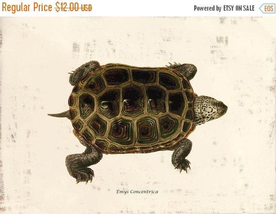 SPRING SALE - ON Sale Antique Turtle Art Print - Home Decor - Emys Concrentrica - 1