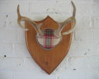 Vintage Deer Antlers - Mounted, Repurposed Taxidermy