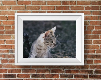 Cat photograph, cat lover home decor, animal photograph, kitty print, childrens room decor, Little tiger