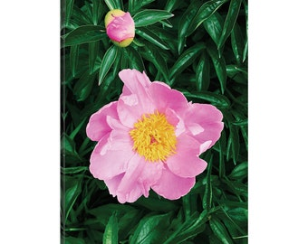 iCanvas The Peony  Gallery Wrapped Canvas Art Print by Chelsea Victoria