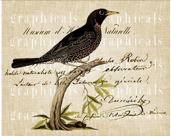 Bird French writing Instant Digital download image for iron on fabric transfer burlap decoupage pillows cards totebags papercraft No. 1838