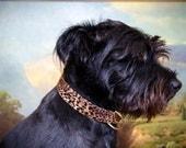 Buckle Dog Collar, Esme, punk rock leopard print, size medium