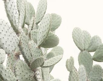 Cactus Picture, Modern Western Wall Decor, Minimalist Nature Artwork, Desert Photography, Green Living Room All Art, Oversized Photo
