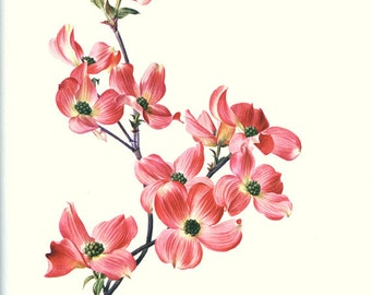 1972 Vintage Botanical art Pink dogwood tree art dogwood print Purple flower poster Pink flower art French country decor Botanical poster
