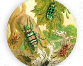 beetles, insects I melamine plate