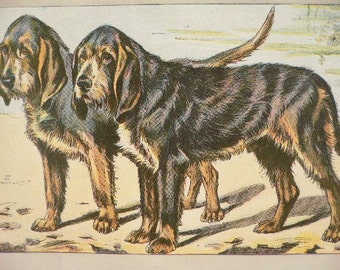ANTIQUE 1907 OTTER HOUND dog signed dog print Chromolithograph P Mahler German artist Collectors item Christmas,Birthday gift Authentic