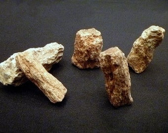 """Five Petrified Wood branches 2 - 3"""" fossils gemstones gems rocks minerals"""