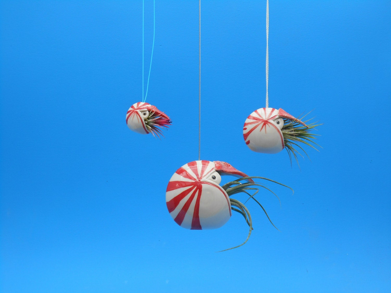 Mini Nautilus Hanging Air Planter Whimsical gift by ... - photo#13