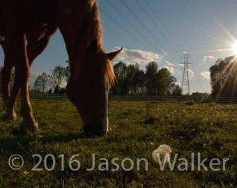 Fine Art Photography Print - Horse in Field