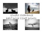 SALE - Horse home decor, equine art, horse photography, horse art, equine decor, 12x8 half price