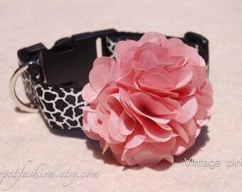 Modern Vintage pink dog collar,dog collar.Birthday Party dog collar. Black Giraffe print with flower dog collar.wedding dog collar