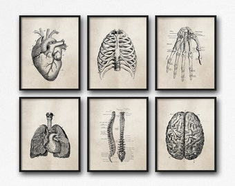 Anatomy Art Prints - Set of Six - Office Art - Medical Student Graduation Gift - Science - Doctor's Office Decor - Brown Neutral - SKU:892