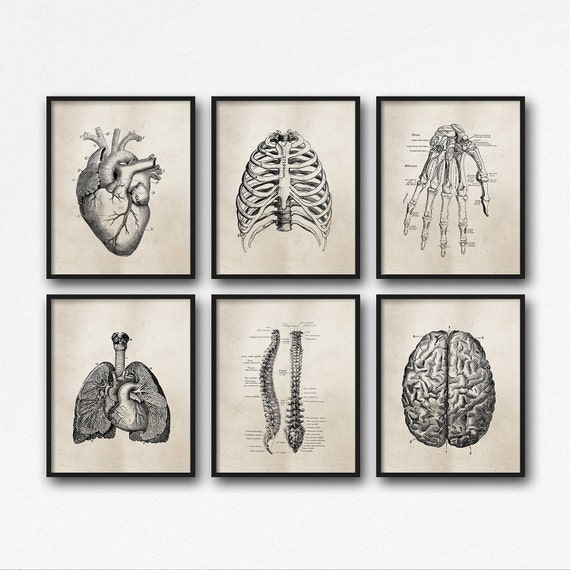 Wall decor medical office : Anatomy art prints office medical student graduation