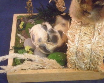 Taxidermy Baby PIG and CHICK FARM Display-chicken, country
