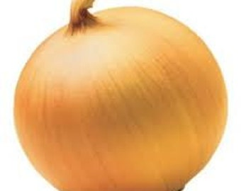 SPANISH ONION SEEDS 25 Fresh vegetable seeds ready to plant in your garden