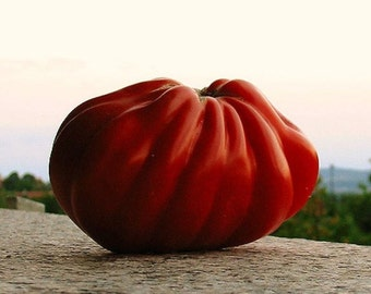Red Pear Abruzzese Tomato- giant, heirloom from  Italy