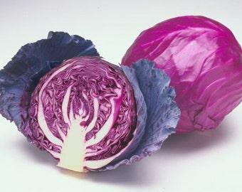 Red Cabbage seeds ,425, organic seeds , gardening ,  non gmo seeds, greek seeds, red cabbage langedijk , vegetable seeds,