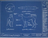 "Blueprint Drawing of a Greyhound - 18"" x 24"""