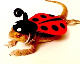 Bearded Dragon Clothing! Ladybug!