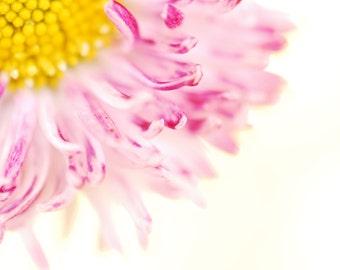 DAISY - Pink & White Flower - Spring