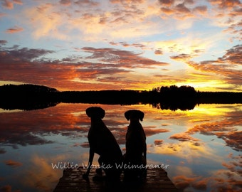 16x20 Canvas Photo, Weimaraner Art, Dog Heaven, Dog Photography, Dogs in Sunset, Water Dogs