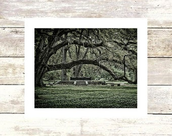 New Orleans Art  Louisiana Art  WEEPING  City Park Oak Trees  New Orleans Art   Fine Art Photograph  Limited Edition of 250