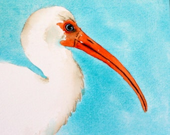 original bird painting bird art Ibis watercolor painting by Betty Moore