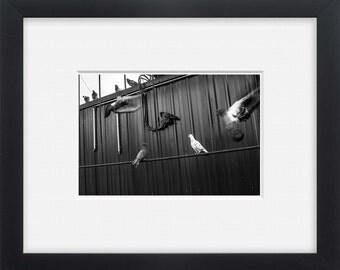 City birds, black and white street photography Latvia, wall art,photo print