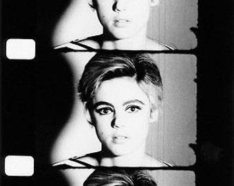B&W Photo Portrait A3 Reprint Of Edie Sedgwick Warhol Star C.1965