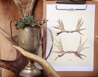 Moose Antler Print