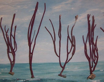 Lot/6 small Spikey Red Gorgonian SEA WHIP Coral False Sea FAN from Florida Beach #38