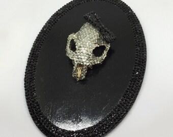 REAL Prairie Dog skull